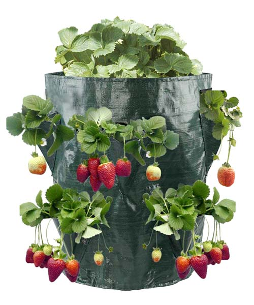 Σάκος φύτευσης φράουλας