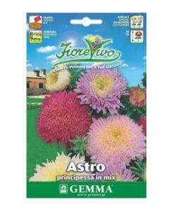 Άστερ με διπλό λουλούδι σε μίγμα χρωμάτων