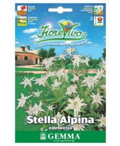 Εντελβάις με λευκό λουλούδι