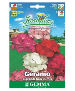 Γεράνι μεγάλο λουλούδι σε πολλά χρώματα