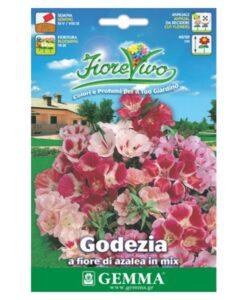 Γκοδέτια διπλή μίγμα λουλουδιών