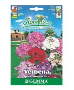 Βερβένα γίγας σε πολλά χρώματα λουλουδιών