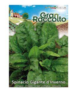 Σπανάκι πλατύφυλλο raccolto